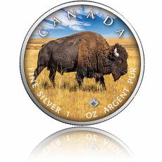 Silbermünze On the Trails of Wildlife Bison 3. Ausgabe 2021