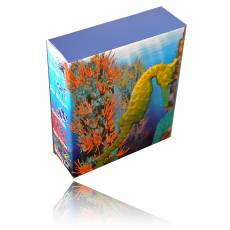 Sea Life Sea Horse 1/2 Oz Silber + Box + Zertifikat